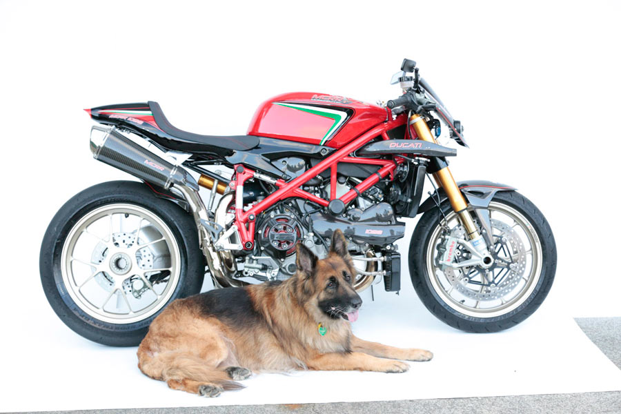 the Villain Ducati 1098S dog